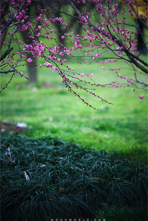 春的森林/春的森林